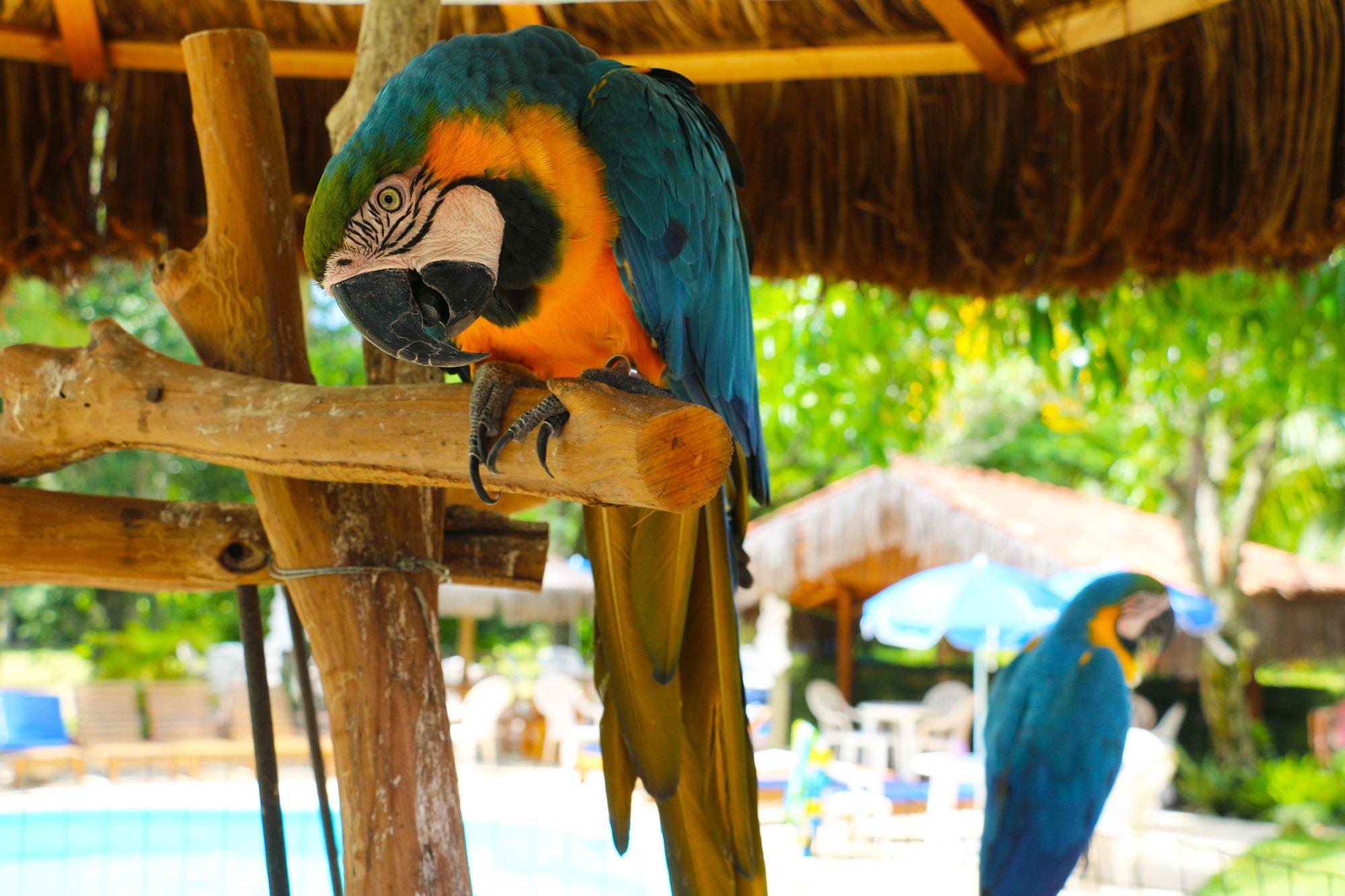 Blue e Ariola, mascotes das Termas