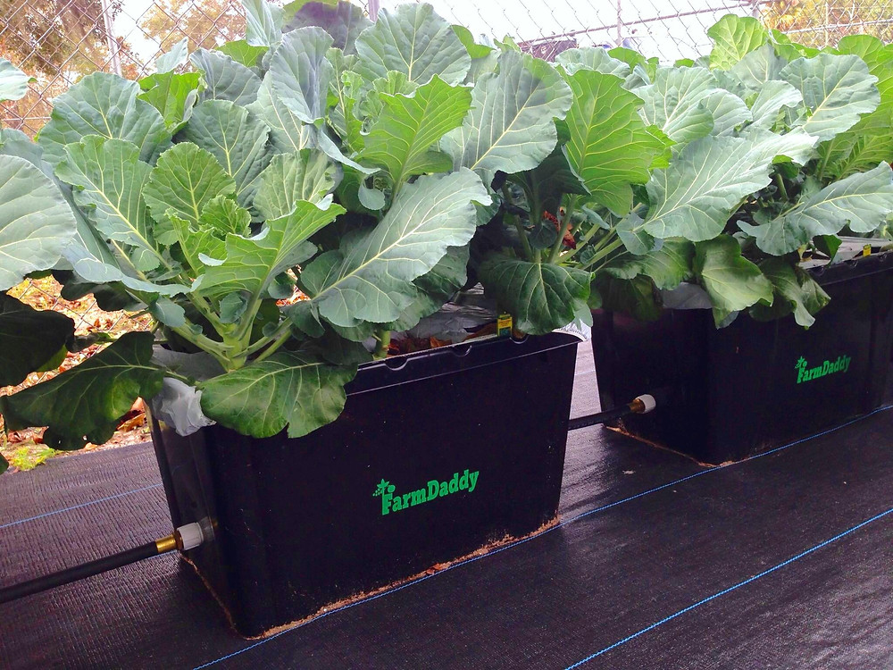 FarmDaddy Self-Gardening Container