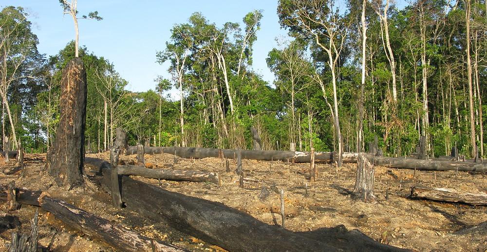 Alemanha anuncia o congelamento das doações para preservação da floresta amazônica e põe em risco acordo comercial entre Mercosul e EU