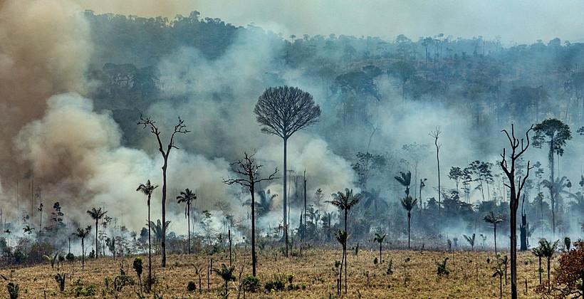 Polícia prende três suspeitos de provocar queimadas em floresta, nenhum é membro de ONG