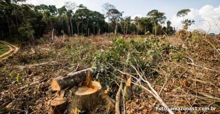 Noruega segue exemplo da Alemanha e suspende repasses milionários para o Fundo Amazônia