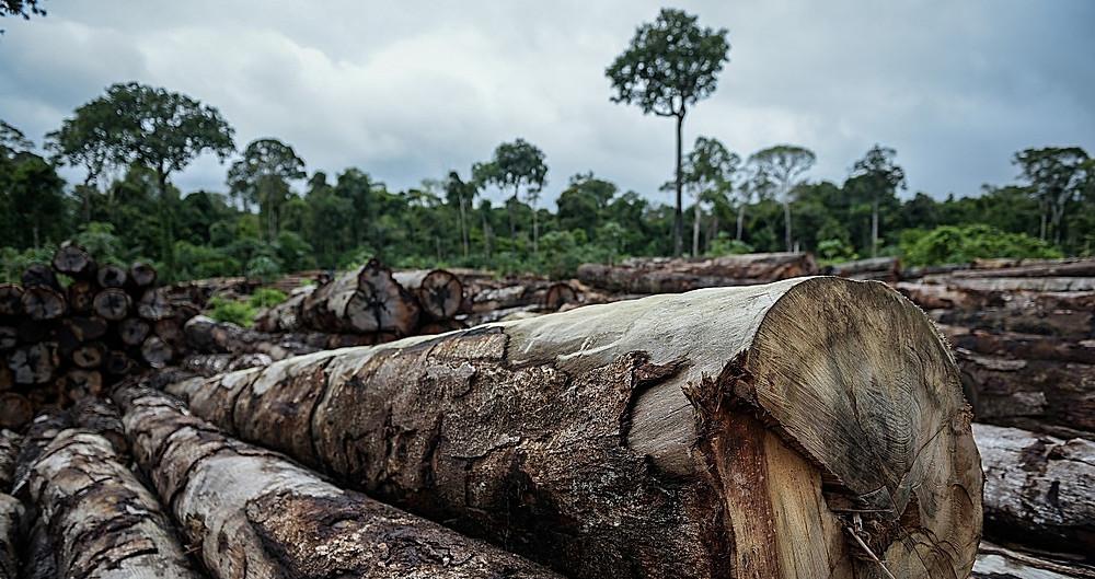 Desmatamento na Amazônia é o maior desde 2008, com crescimento de 29,5% em relação ao ano anterior