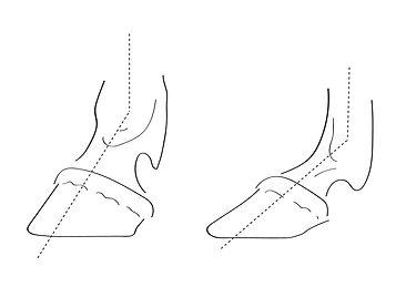 diagrams caballo-04.jpg