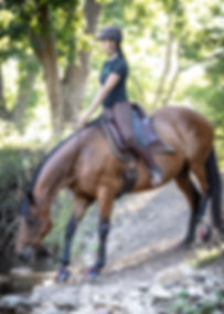 farrier barefoot trimmer in Johannesburg riding horse with Scoot Boots