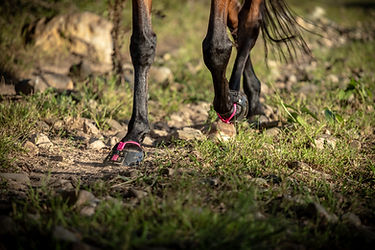 horse ridden in Scoot Boots in South Africa