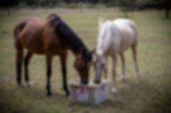 caballo missed batch-19.jpg