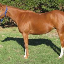 Thoroughbred Pony