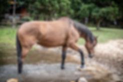 Caballo horse in river