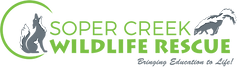 SCWR new logo - twotone - 600x170.png