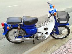 blue cub.jpg