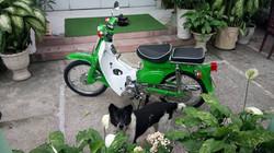 green cub