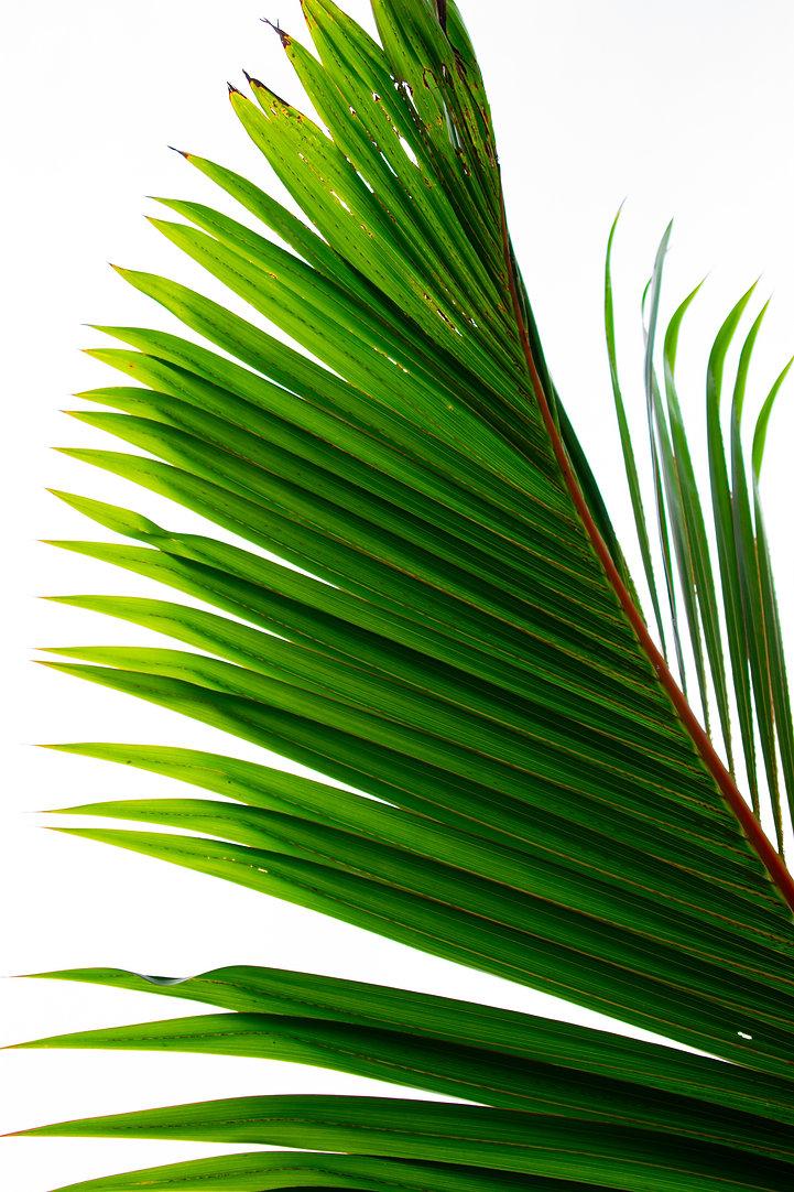 green-palm-tree-leaf-2857915.jpg