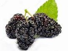 Mulberry Fragrance/Body Oil 1/2 Oz.