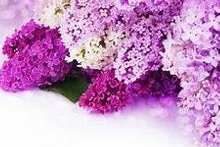 Lilac Fragrance/Body Oil 1/2 oz.