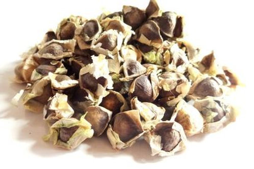 Moringa Seeds - Still in shell - approximately 80-100 seeds - 1lbs