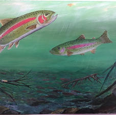Trout in the River
