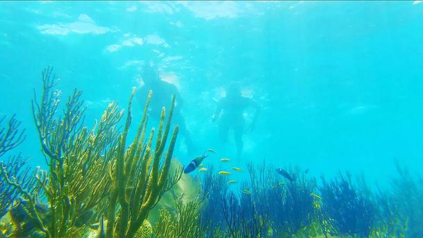 Snorkel Safari 7.jpg