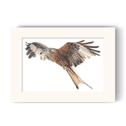 Red Kite Print - Rowan the Red Kite