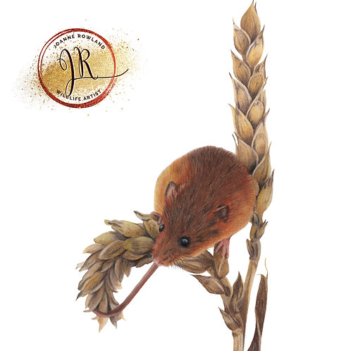 Harvey the Harvest Mouse