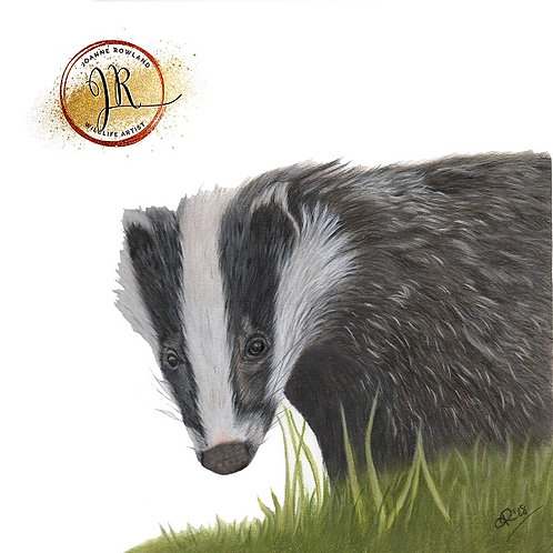 Hector the Badger