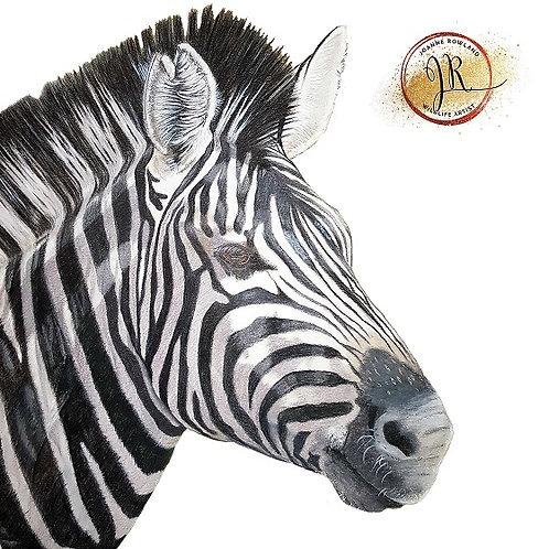 Lucky the Zebra