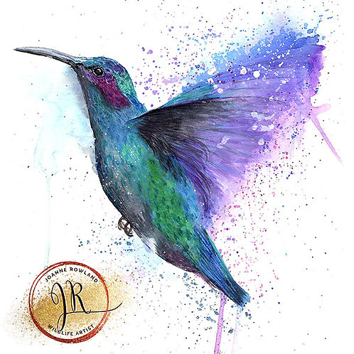 Colour Splash Hummingbird