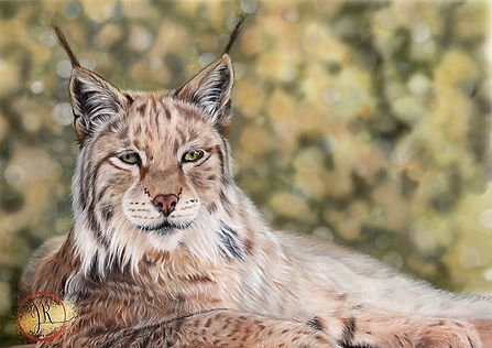 Lynx in Coloured Pencil