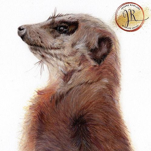 Monty the Meerkat