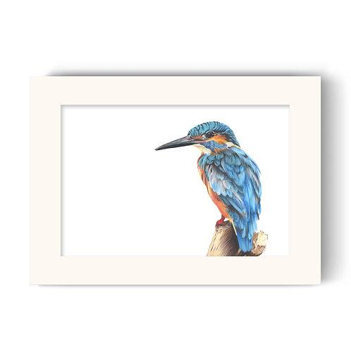 Kingfisher Print - Kendal the Kingfisher