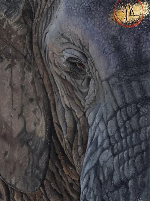 Elephant Print - Themba
