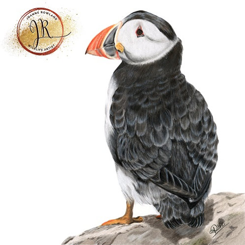Sir Percival the Puffin
