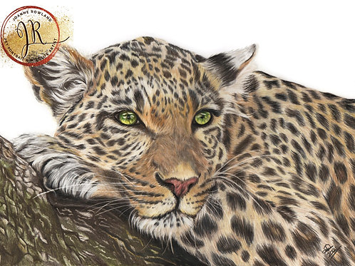 Kutamka - Leopard