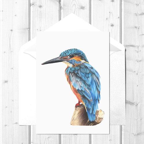 Kingfisher Fine Art Card - Kendal the Kingfisher