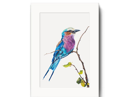 Lilac Breasted Roller Print - Amani