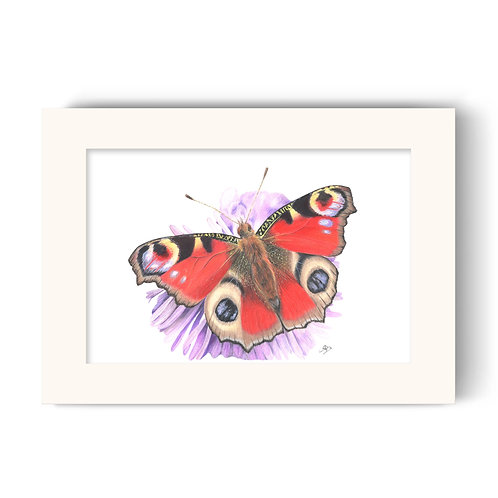 Butterfly Print - Bea the Peacock Butterfly