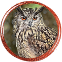 Button_EagleOwl