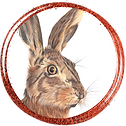 Button_Hare
