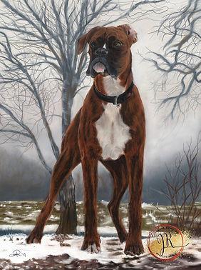 Boxer Dog in Pastel