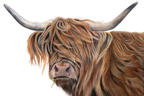 Highland Cow Fine Art Card - Toffee