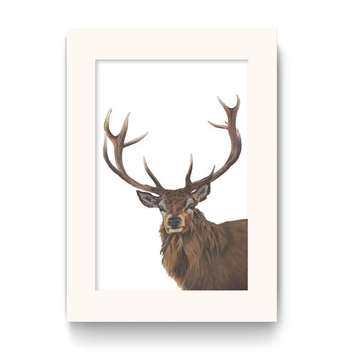 Stag Print - Reg the Regal Stag