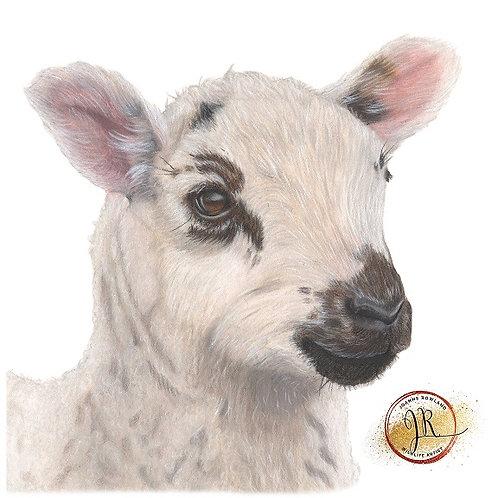 Barbara the Bonnie Lamb