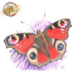 Butterfly in Coloured Pencil