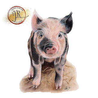 Pig in Coloured Pencil
