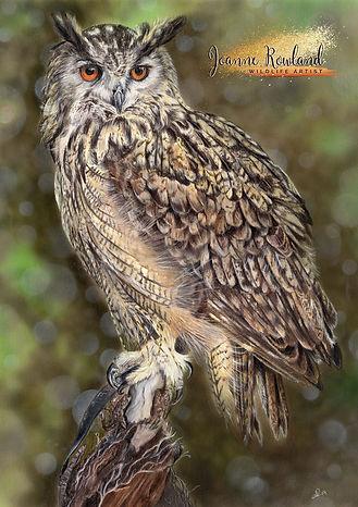 Eagle Owl in Coloured Pencil