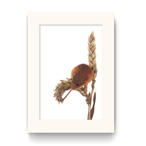 Mouse Print - Harvey the Harvest Mouse