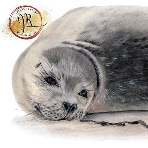 Wor Sammy the Seal