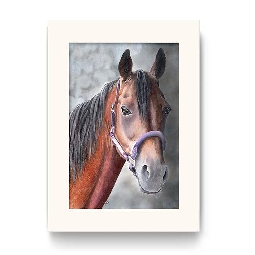 Horse Print - Vimto