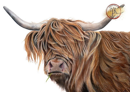 Highland Cow in Coloured Pencil