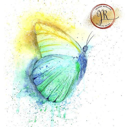 Colour Splash Butterfly