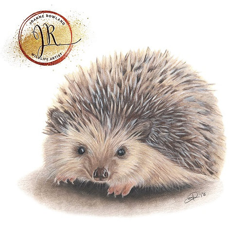 Huggy the Hedgehog